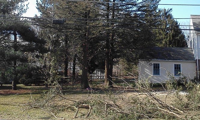 tree removal in Malvern