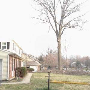 West Chester Tree Pruning