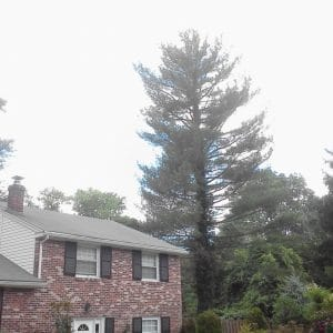 Tree Removal in Drexel Hill