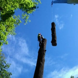 Tree Removal in West Chester