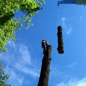 West Chester Tree Removal