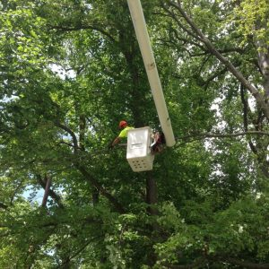 Tree Pruning in Willmington