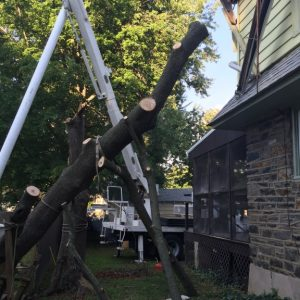 Aldan Tree Removal-During
