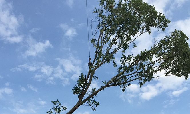 Tree Removal in Aston