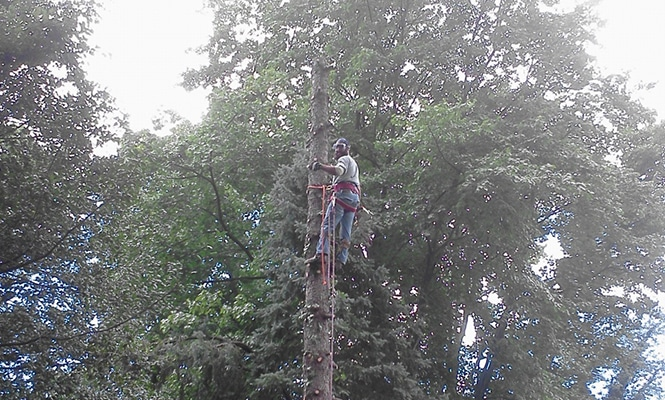 Drexel Hill Tree Removal