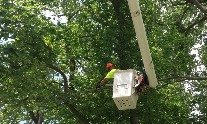 Wilmington Tree Pruning