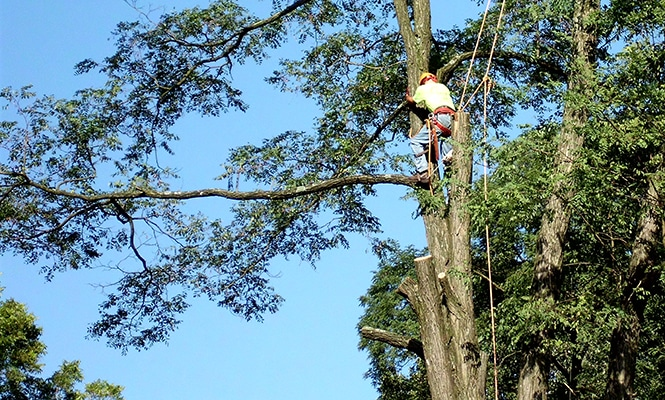 Nottingham Tree Removal