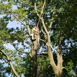 Chadds Ford Tree Removal-During