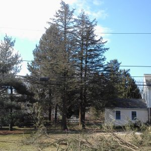 Tree Removal in Malvern, During