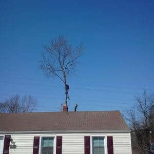 Removing a Tree in Newcastle, During