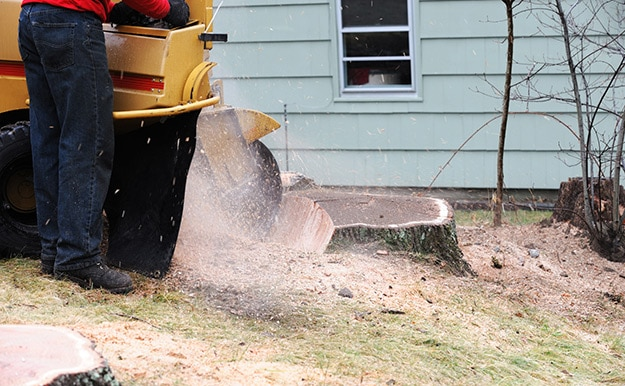 stump removal and grinding in front of Delaware County home