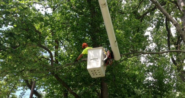 Man working at a Tree Pruning and cutting service job in Aston, PA