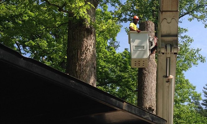 tree pruning in New Castle County