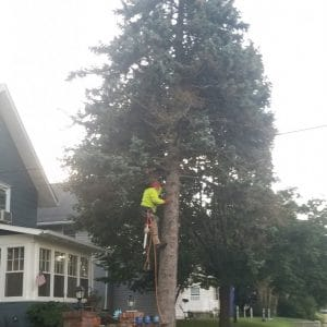 During Tree Removal