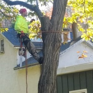 Removing Trees in Thornton