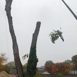 Crane Tree Removal in Folcroft