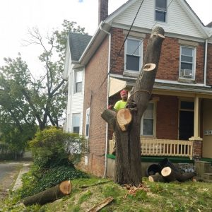 Taking down a tree in Darby, PA