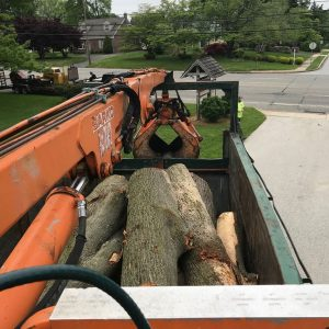 Tree cut into manageable pieces in back of the truck