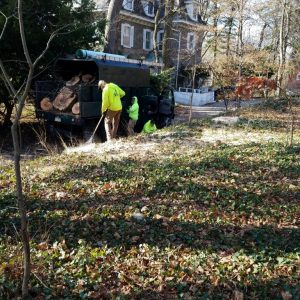 Cleaning up after removing a dead tree in Wallingford
