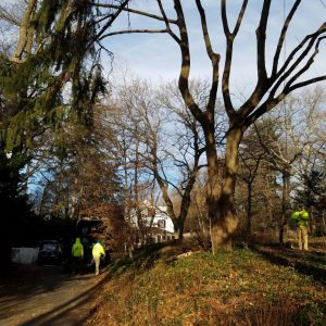 Before removing a dead tree in Wallingford, PA