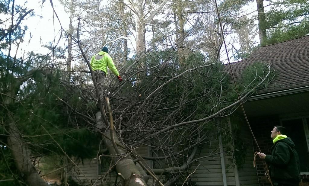Bryn Mawr Emergency Tree Removal