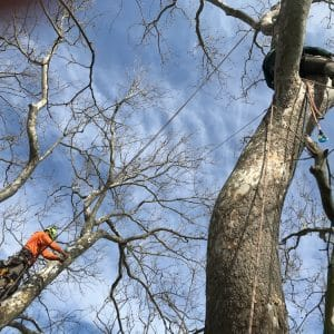 Communication between workers is crucial during tree jobs