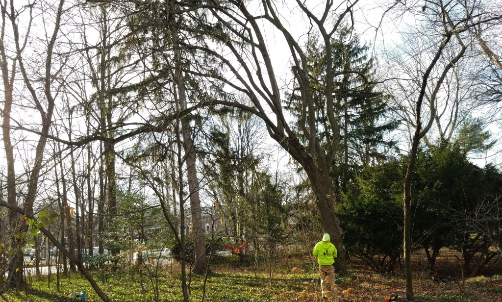Wallingford Tree Removal