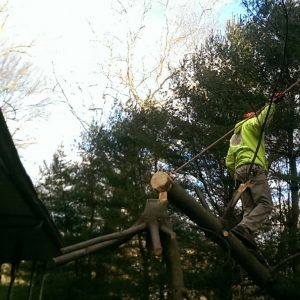 While Removing the Tree