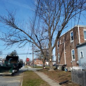 Before Pruning a tree in Essington, PA