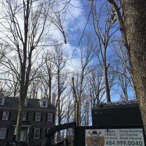 Using a crane to take down a tree in Goshen, PA