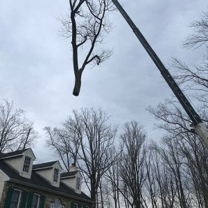 removing a tree with a crane