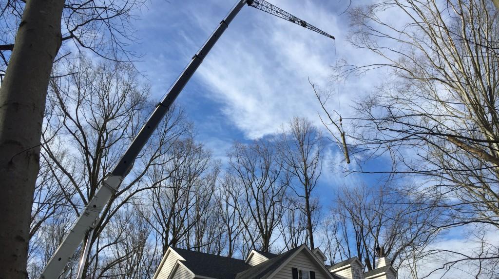 Goshen, PA tree removal