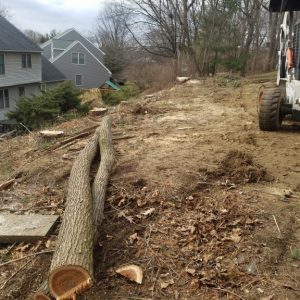 A lot clearing project in Kennett Square