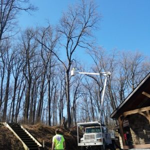 Removing a tree in Unionville PA
