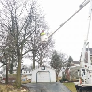 While removing a tree in Havertown