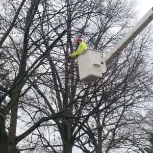 The process of cutting down a tree in Havertown, PA