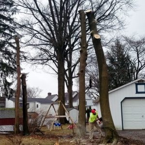 Cutting down a tree in Delaware County