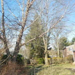 Before getting started with a Swarthmore tree removal