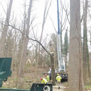Wrapping up tree removal