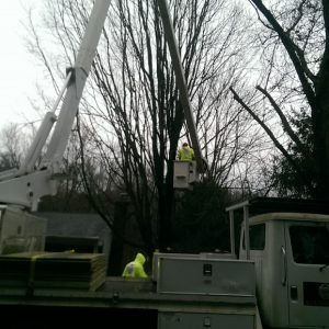 Traveling to Newark, DE to remove a tree