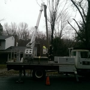 Removing a tree in Newark, DE