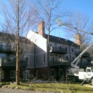 Pruning trees in Rockland, PA