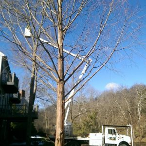 The tree trimming process in Rockland PA