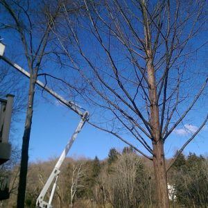 A Rockland, PA tree pruning
