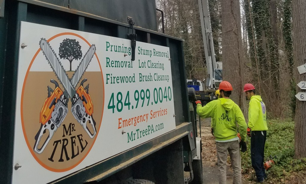 Removing a Tree in Rose Valley, PA