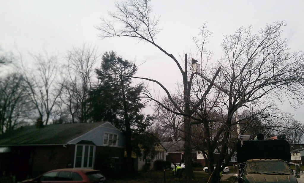 Secane Tree Removal by Mr Tree