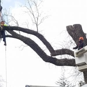While Removing a tree in Boothwyn