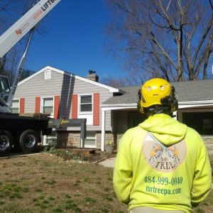 Getting ready to take down a tree in Concordville PA
