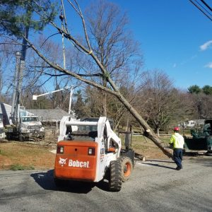 The process of removing a tree for a Concordville homeowner