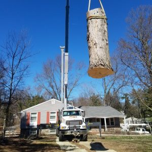 Using a crane to remove a tree in Concordville